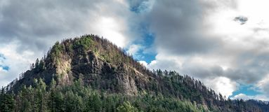 Columbia river gorge mountain with charred trees stock image