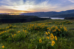 Columbia river gorge National scenic area overlook. Columbia river gorge scenic overlook in sunset. Wild flowers meadow at sunset. Rowena Crest view point Royalty Free Stock Photo
