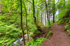 Columbia River Gorge Trail Royalty Free Stock Images