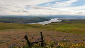 Columbia River Gorge with Wild Flowers and Clouds Time Lapse Royalty Free Stock Photo