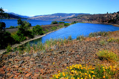 Columbia River. A typical landscape view of the Columbia River Gorge. Yellow flowers in the foreground, hills under clear blue skies in background Royalty Free Stock Photo