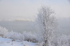 Columbia River Winter Scape; After the Jack Frost`s Visit. Frosted, flocked tree, columbia river, north richland, washington, misty day, january snow scape Stock Images