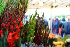 Columbia road flower market in london. Beautiful columbia road flower market in london Royalty Free Stock Photo