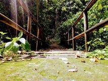 Columbiaanse Groene natuurlijke houten brug Royalty-vrije Stock Foto