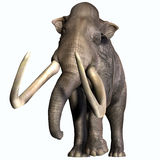 Columbian Mammoth Front Profile Stock Photo