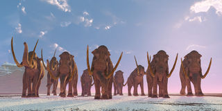 Columbian Mammoth Herd. As winter sets in a herd of Columbian Mammoths migrate to a warmer climate Stock Image