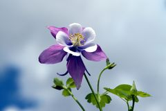 Free Columbine And Sky Stock Images - 2281024