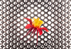 Columbine Flower on futuristic Stock Photo