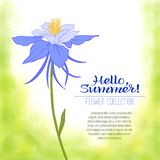A Columbine flower on a green watercolor background. The flowers royalty free illustration