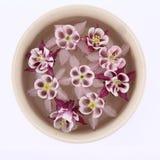 Columbine flowers floating royalty free stock photo