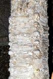 Column in Capela dos Ossos in Evora, Portugal Stock Images