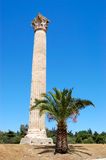 Column and palm tree, athens Royalty Free Stock Photos