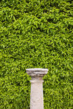 Column Pedestal and Living Wall Stock Photos