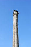 Column of Phocas in Rome Stock Image
