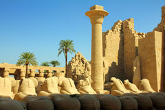 Column and statues of sphinx in karnak temple Royalty Free Stock Images