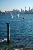 Column in Sydney. Stone column in water, white yachts and sydney tower Stock Photography