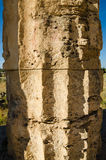 Column of The Temple of Hera (Temple E) at Selinun Royalty Free Stock Image