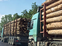 Column timber trucks with logs moving on the road Stock Image