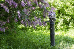 Column of water. In lilac bushes in the gardener Royalty Free Stock Photo