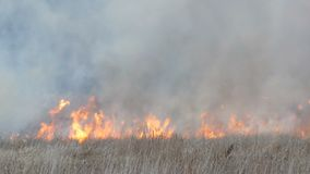 Columna del humo enorme de un fuego elemental en la estepa del bosque, las zarzas ardientes y la hierba seca almacen de video