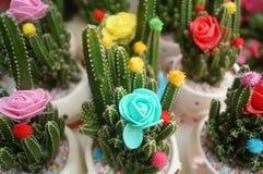Columnar cactus succulents. Succulents columnar cactus in the flower shop sale stock images