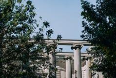 Columnas antiguas en la luz del sol detrás de un árbol Fotos de archivo