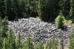 Columnas basálticas destrozadas en el bosque Fotos de archivo libres de regalías