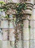 Columnas de piedra cubiertas con la hiedra Fotografía de archivo