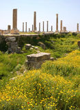 Columnas romanas, neumático (Líbano) Foto de archivo libre de regalías