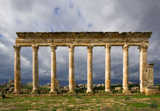 Columns of Apamea Syria Stock Images