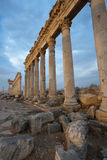 Columns in Aphamia Royalty Free Stock Photography