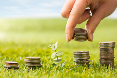 The columns of coins on grass Royalty Free Stock Photos