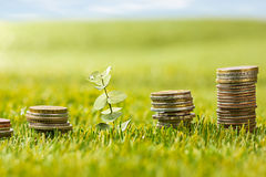 The columns of coins on grass Royalty Free Stock Photography