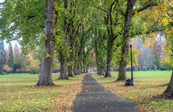 Columns of giant elm trees shed their leaves on paved path on lo Stock Image