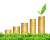 Columns of gold coins and green plant in green grass over white Royalty Free Stock Image