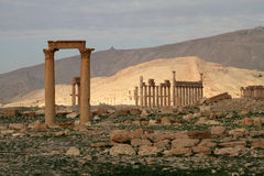 Columns of Palmyra Royalty Free Stock Images
