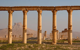 Columns in Palmyra Royalty Free Stock Images