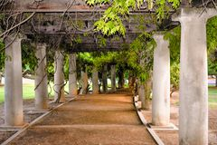 Columns in the Park. Walkway with columns covered in wisteria vines in Roeding Park. Roeding Park is located in Fresno, California royalty free stock photography