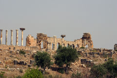 Columns of Volubilis Stock Photo