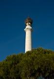 Coluna e pinheiro foto de stock royalty free