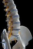 Coluna espinal fotografia de stock