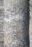 Coluna Textured imagens de stock royalty free