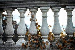 Colunas cinzentas e hera marrom Fotografia de Stock