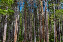 Colunas da natureza Foto de Stock
