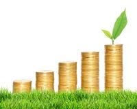 Colunas de moedas de ouro e da planta verde na grama verde sobre o branco Imagem de Stock Royalty Free