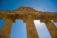 Colunas de Selinunte com pássaro de vôo Imagens de Stock