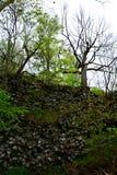 Colunas do basalto - parede de prisma em Alemanha, Baviera fotografia de stock royalty free