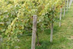 Colunas e Vinery de madeira Imagem de Stock Royalty Free