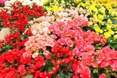 Colurful des Blumengartens Lizenzfreies Stockfoto