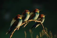 Colurful ptaki fotografia royalty free